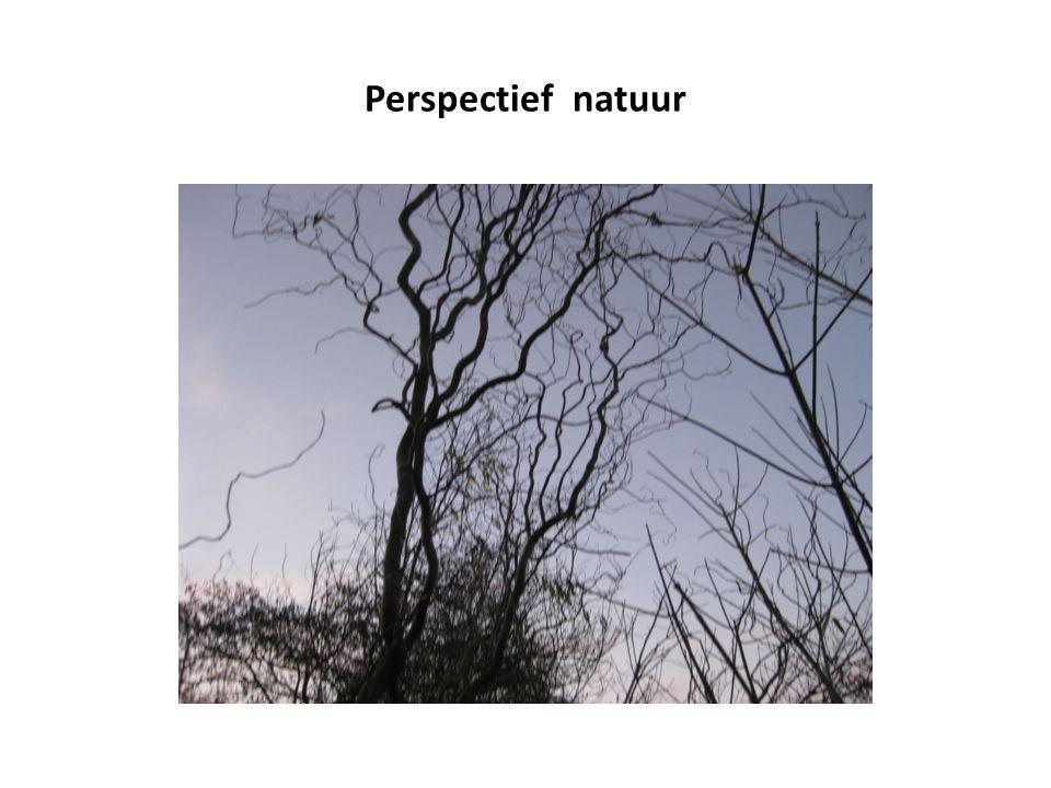 Perspectief natuur