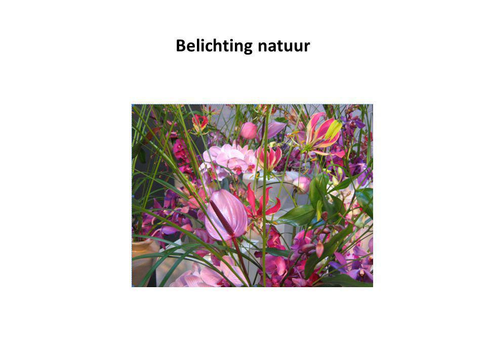 Belichting natuur