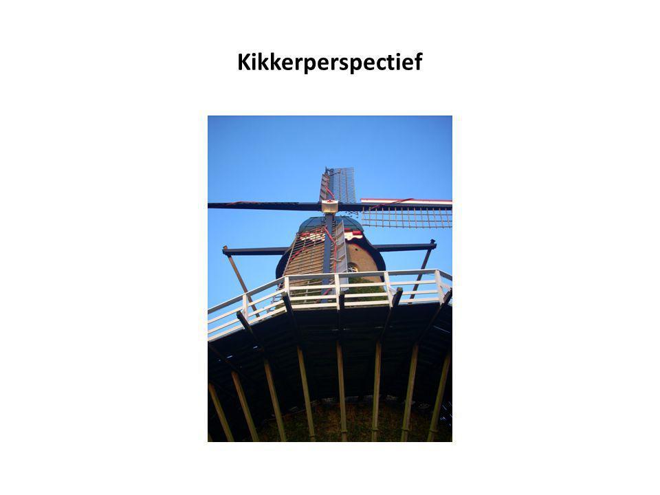Kikkerperspectief