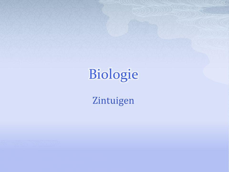 Biologie Zintuigen
