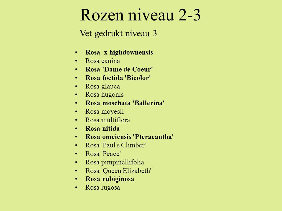 Rozen niveau 2-3 Vet gedrukt niveau 3 Rosa x highdownensis Rosa canina