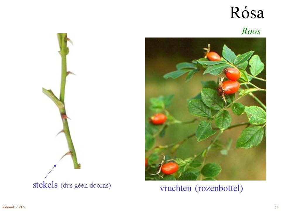 Rósa geveerd blad stekels (dus géén doorns) Roos