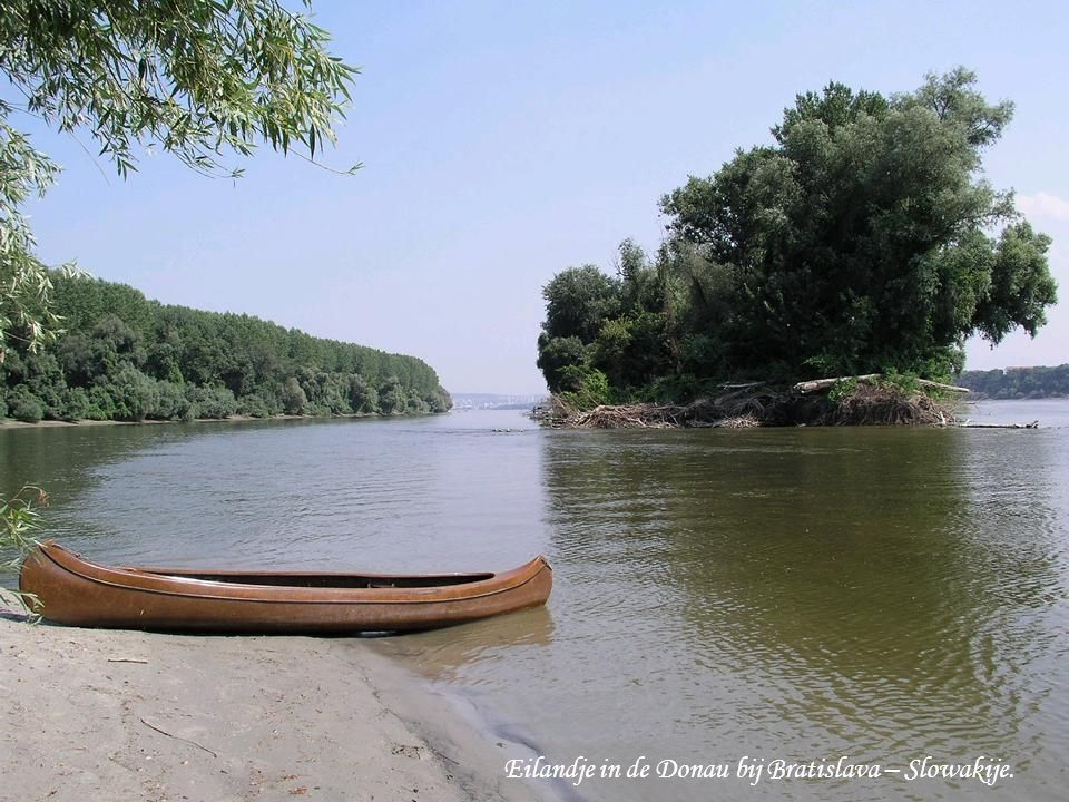 Eilandje in de Donau bij Bratislava – Slowakije.