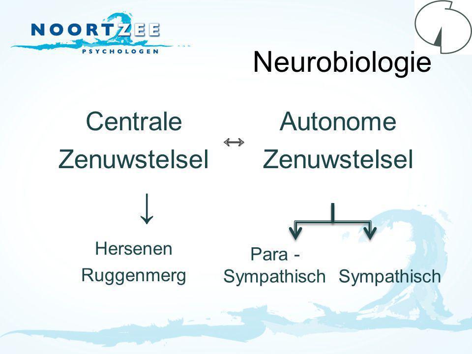 Neurobiologie Centrale Zenuwstelsel Autonome Zenuwstelsel ↔ Hersenen