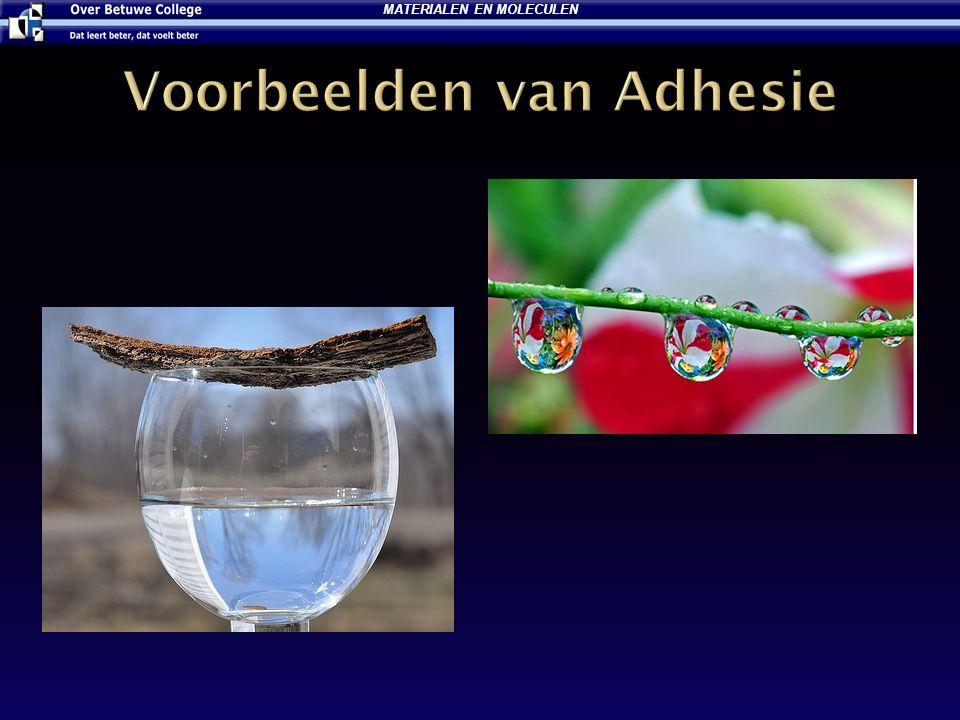 Voorbeelden van Adhesie