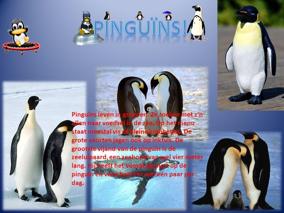 Pinguïns!!