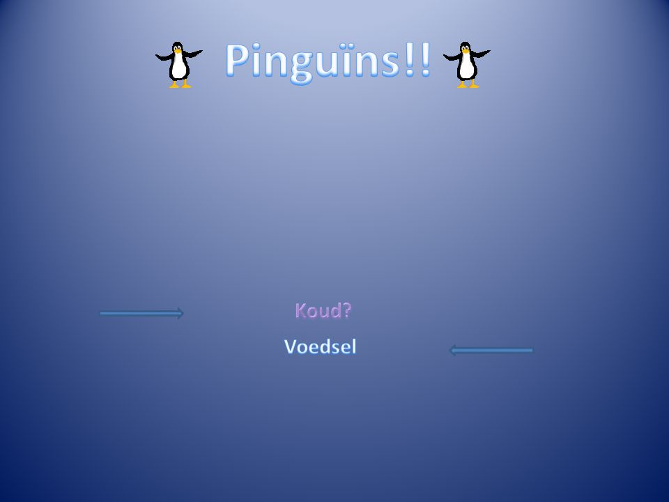 Pinguïns!! Koud Voedsel