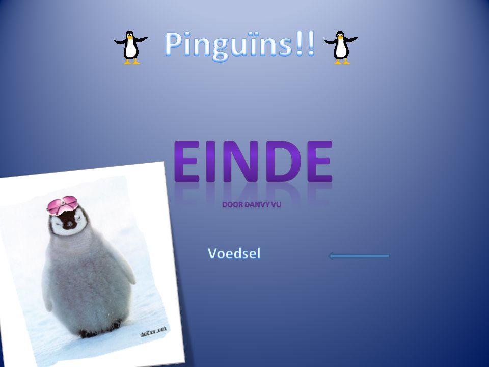 Pinguïns!! Einde Door Danvy Vu Voedsel