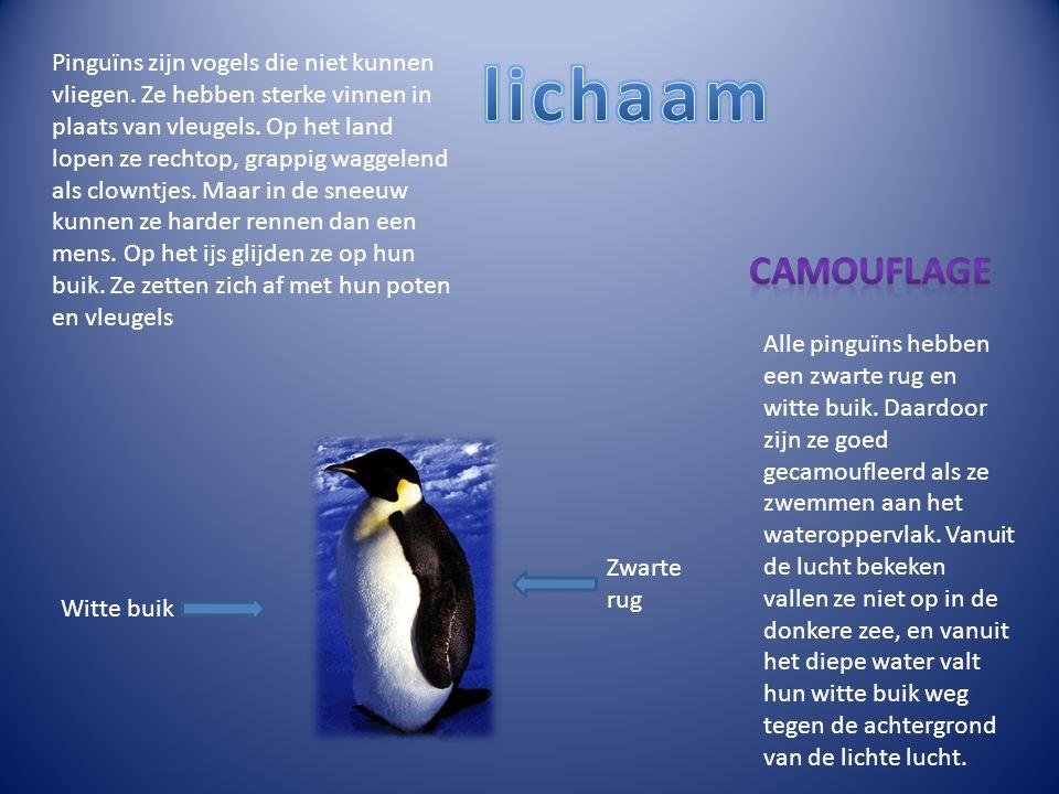 Pinguïns zijn vogels die niet kunnen vliegen