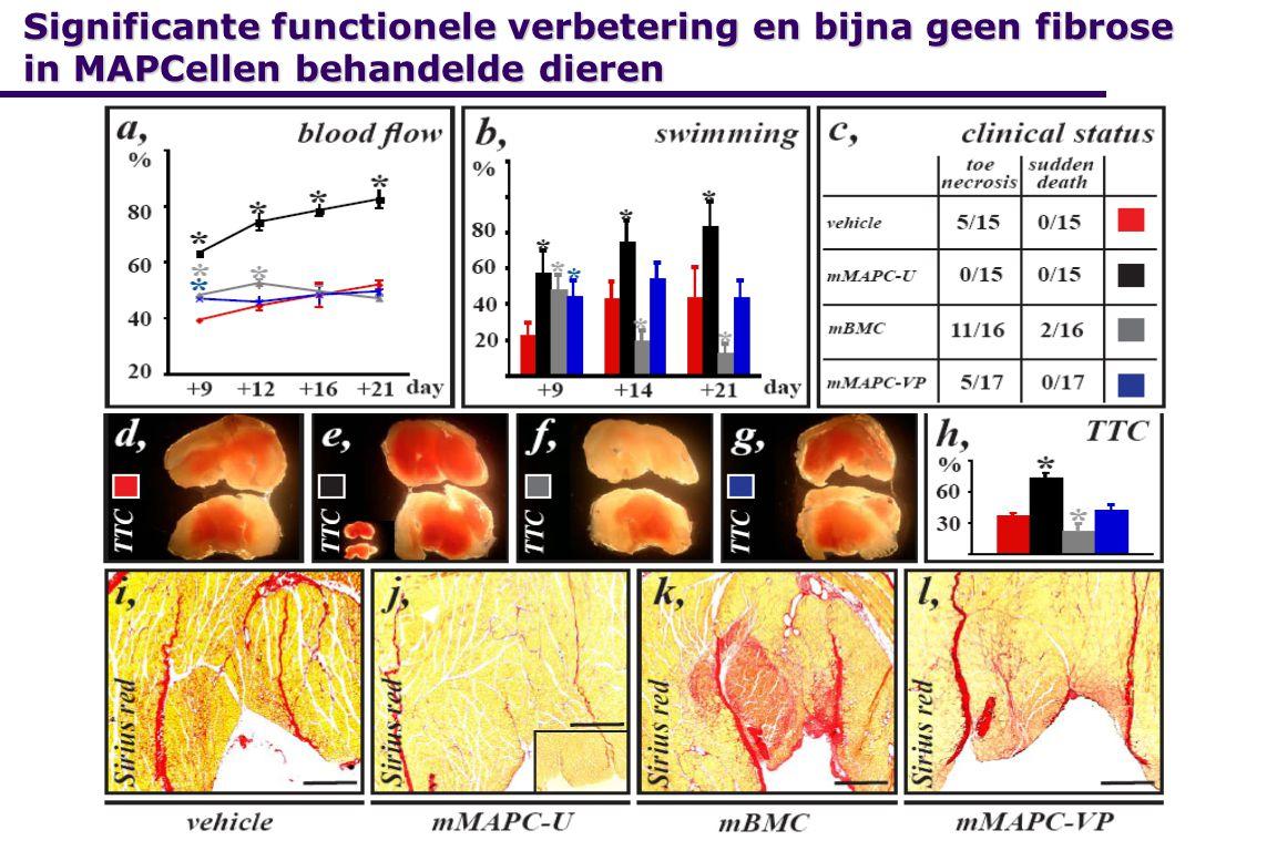 Significante functionele verbetering en bijna geen fibrose in MAPCellen behandelde dieren