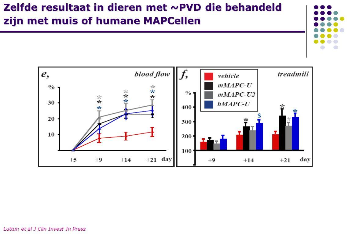 Zelfde resultaat in dieren met ~PVD die behandeld zijn met muis of humane MAPCellen