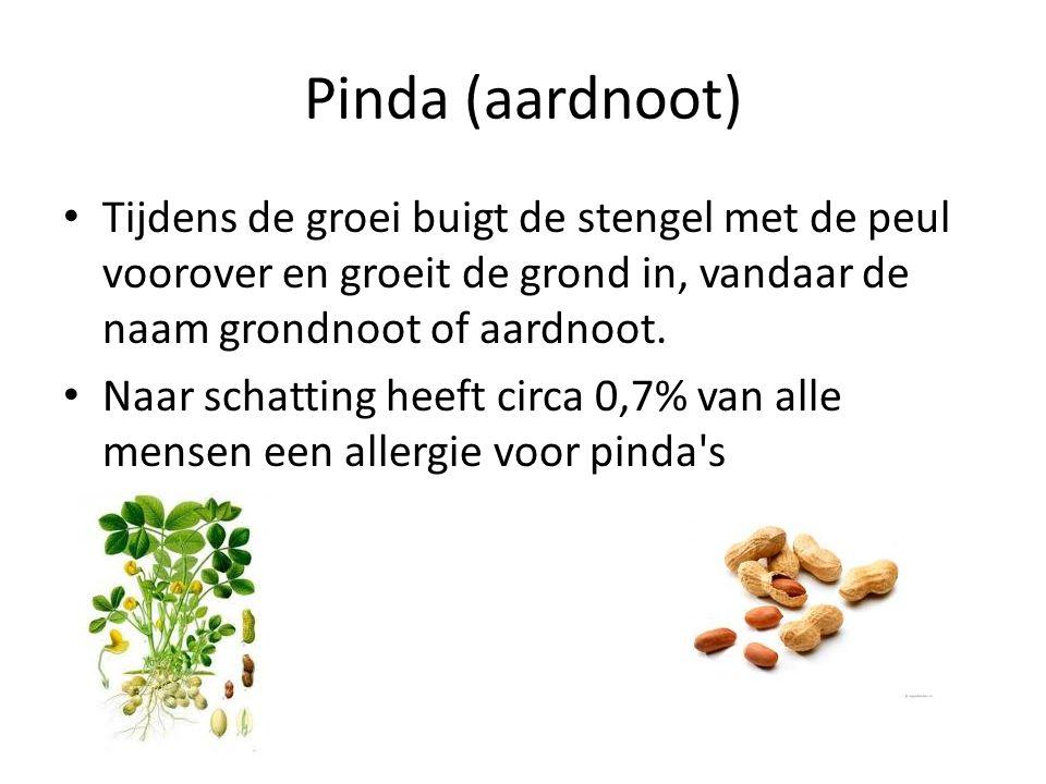 Pinda (aardnoot) Tijdens de groei buigt de stengel met de peul voorover en groeit de grond in, vandaar de naam grondnoot of aardnoot.