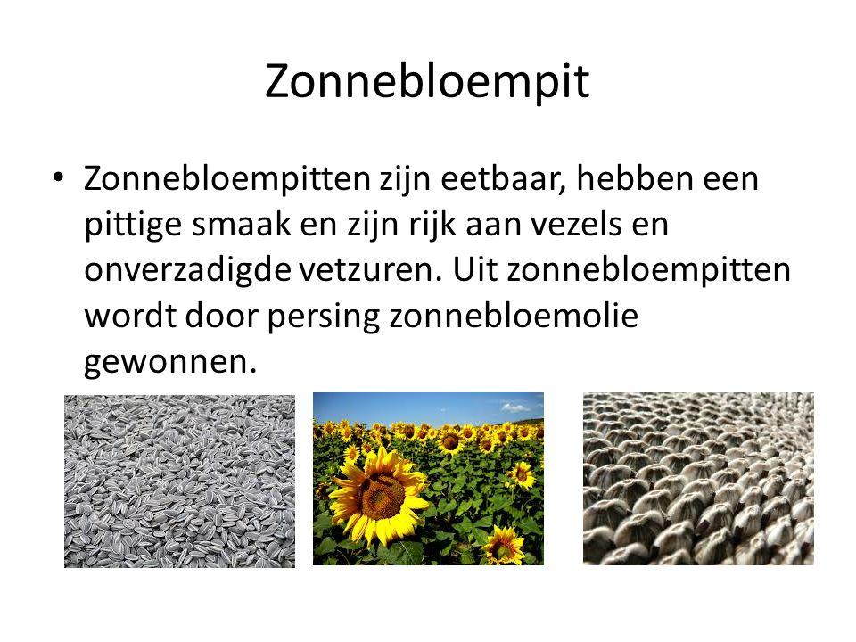 Zonnebloempit