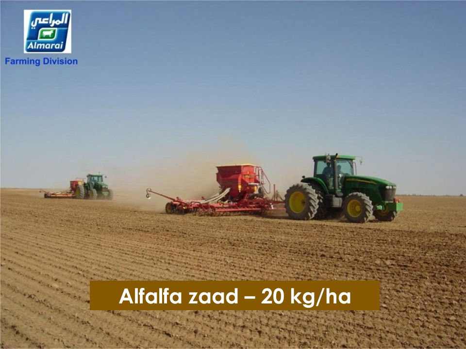 Alfalfa zaad – 20 kg/ha