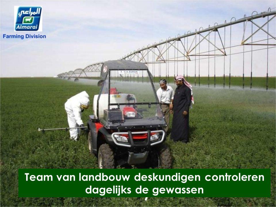 Team van landbouw deskundigen controleren dagelijks de gewassen