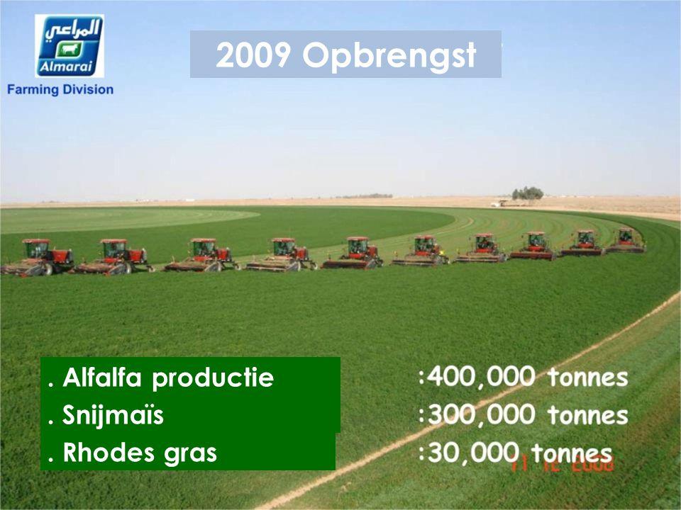 2009 Opbrengst . Alfalfa productie . Snijmaïs . Rhodes gras