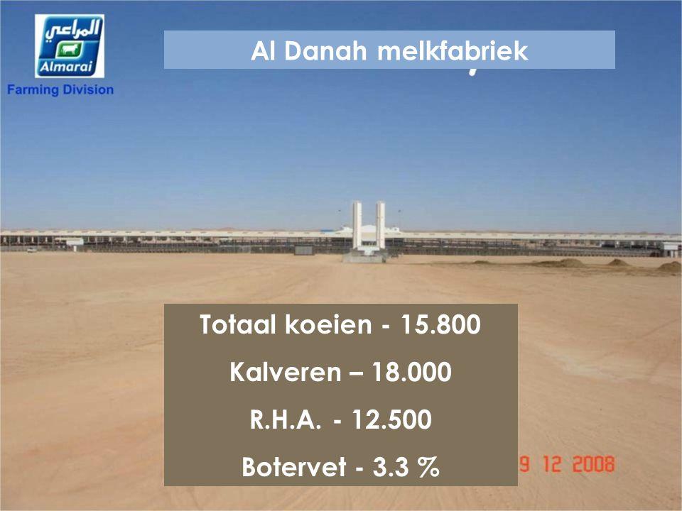 Al Danah melkfabriek Totaal koeien - 15.800 Kalveren – 18.000 R.H.A. - 12.500 Botervet - 3.3 %