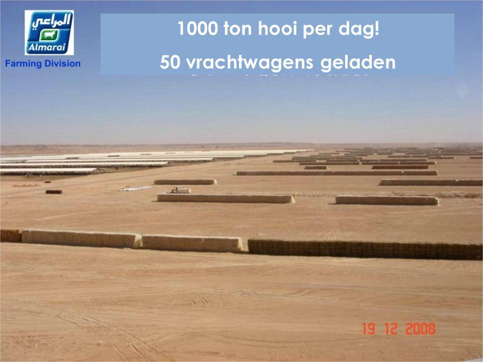 1000 ton hooi per dag! 50 vrachtwagens geladen