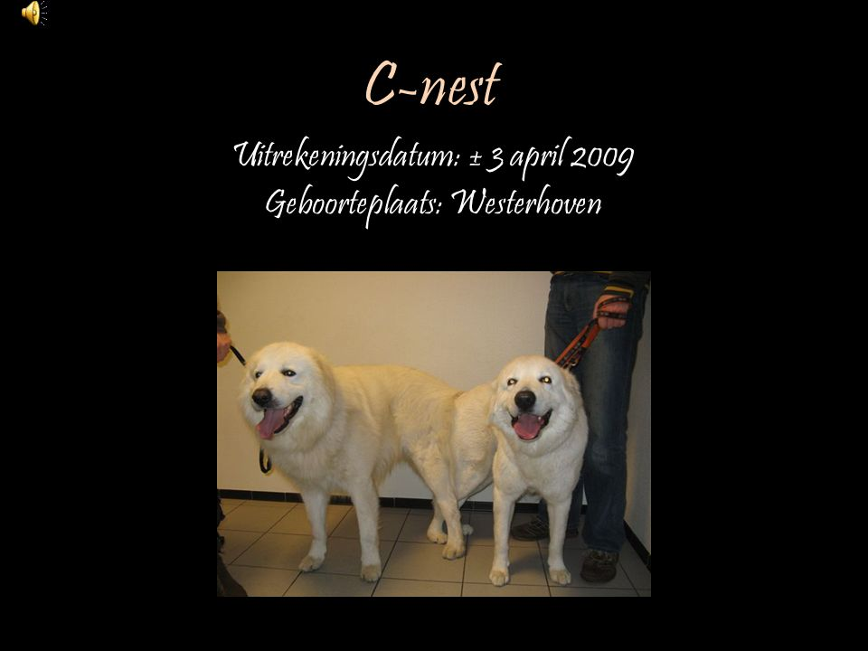 Uitrekeningsdatum: ± 3 april 2009 Geboorteplaats: Westerhoven
