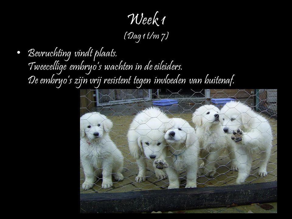 Week 1 (Dag 1 t/m 7)