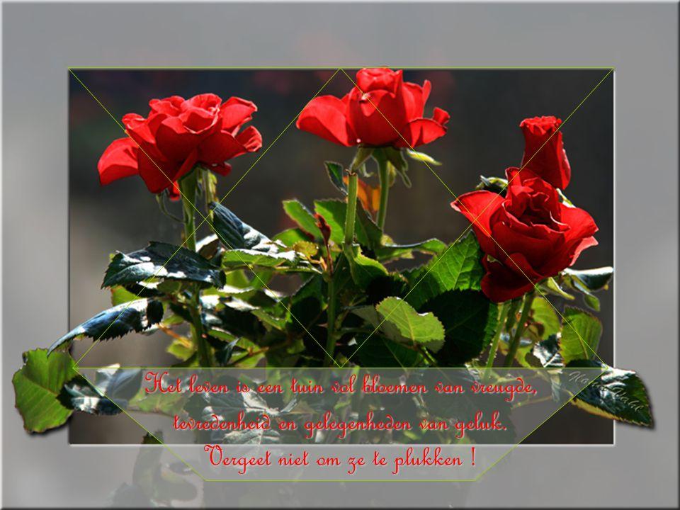 Het leven is een tuin vol bloemen van vreugde, tevredenheid en gelegenheden van geluk.