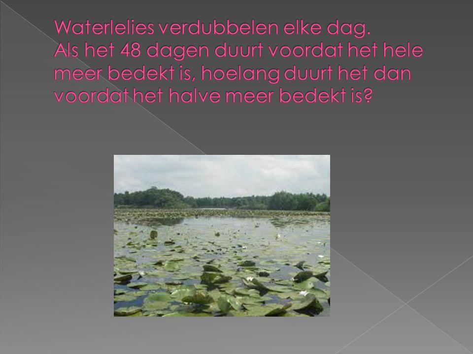 Waterlelies verdubbelen elke dag