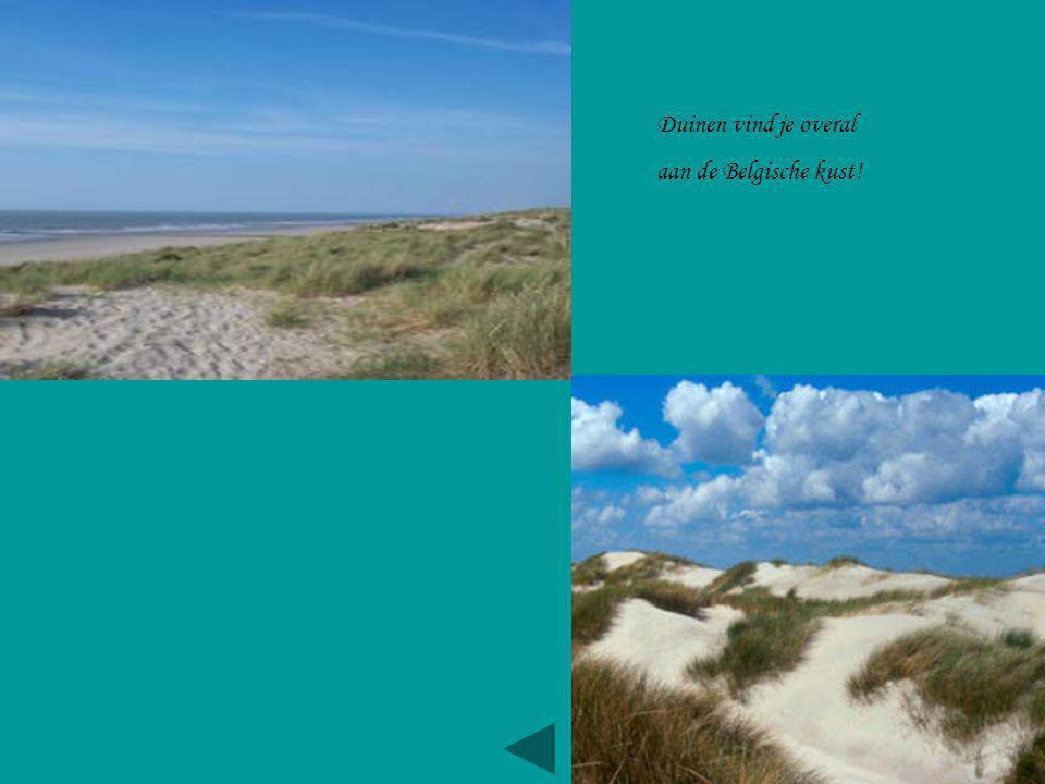 Duinen vind je overal aan de Belgische kust!
