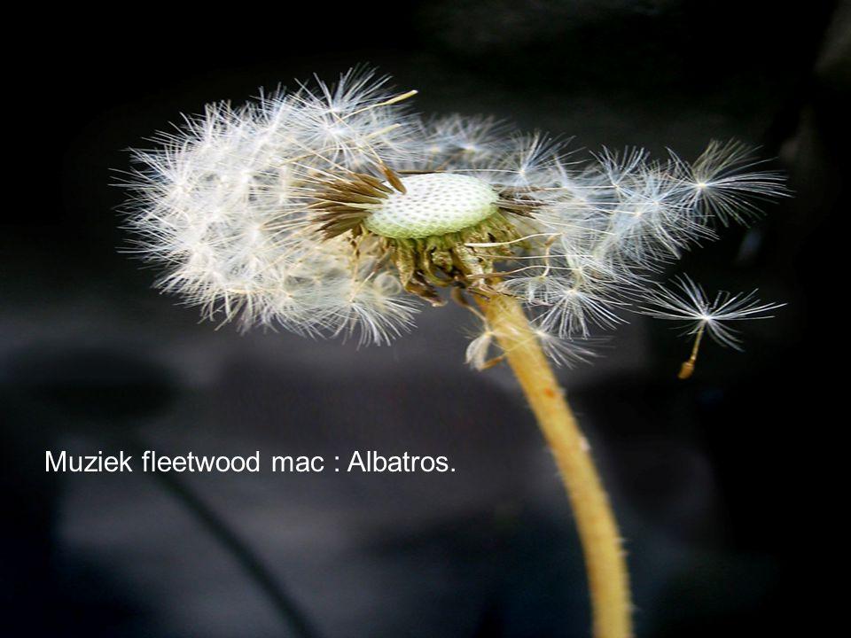 Muziek fleetwood mac : Albatros.