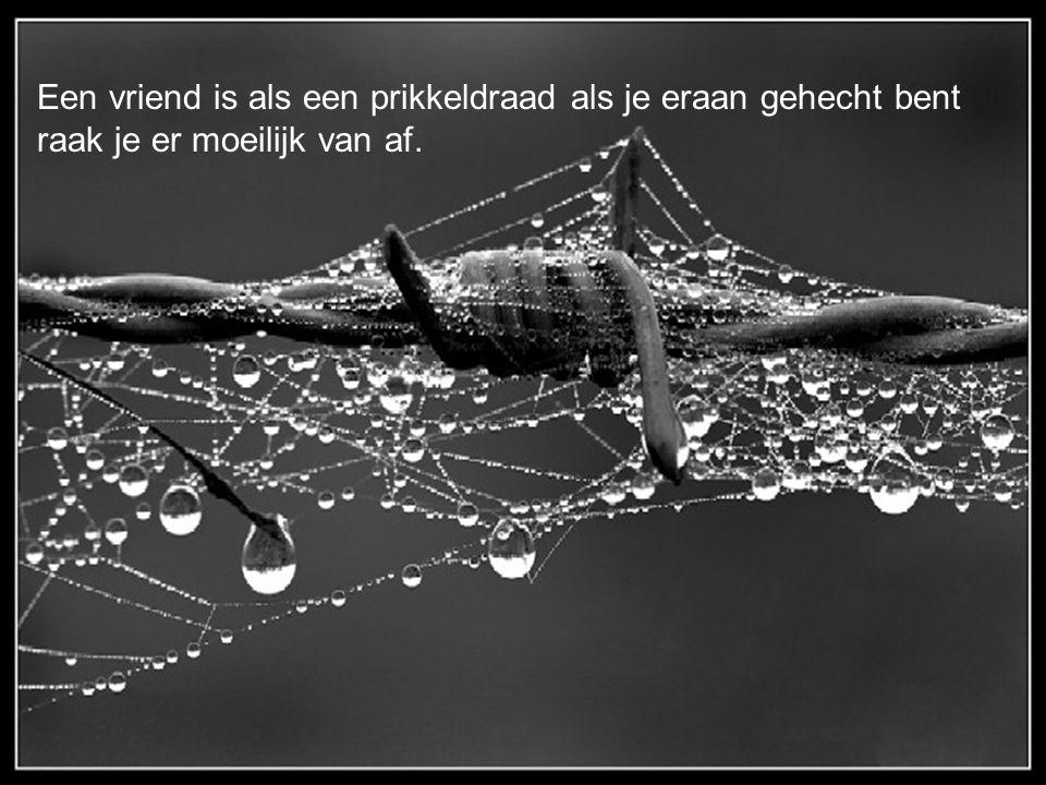 Een vriend is als een prikkeldraad als je eraan gehecht bent raak je er moeilijk van af.