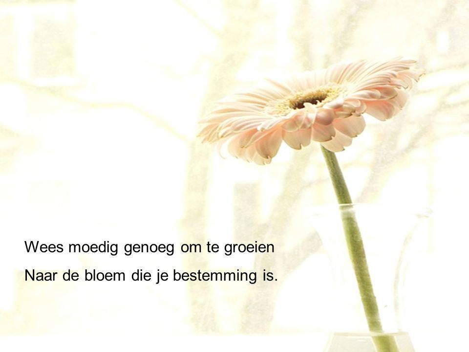 wees als een bloem