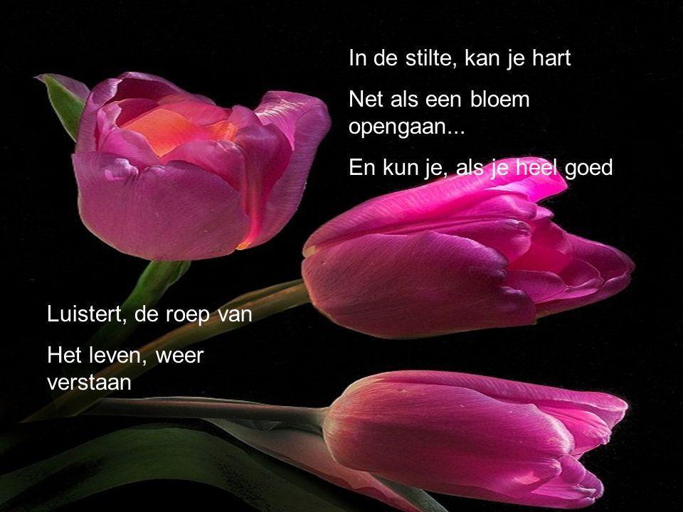 In de stilte, kan je hart Net als een bloem opengaan... En kun je, als je heel goed. Luistert, de roep van.