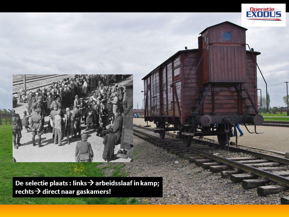 De selectie plaats : links arbeidsslaaf in kamp; rechts direct naar gaskamers!