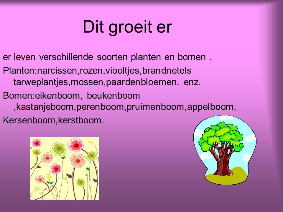 Dit groeit er er leven verschillende soorten planten en bomen .