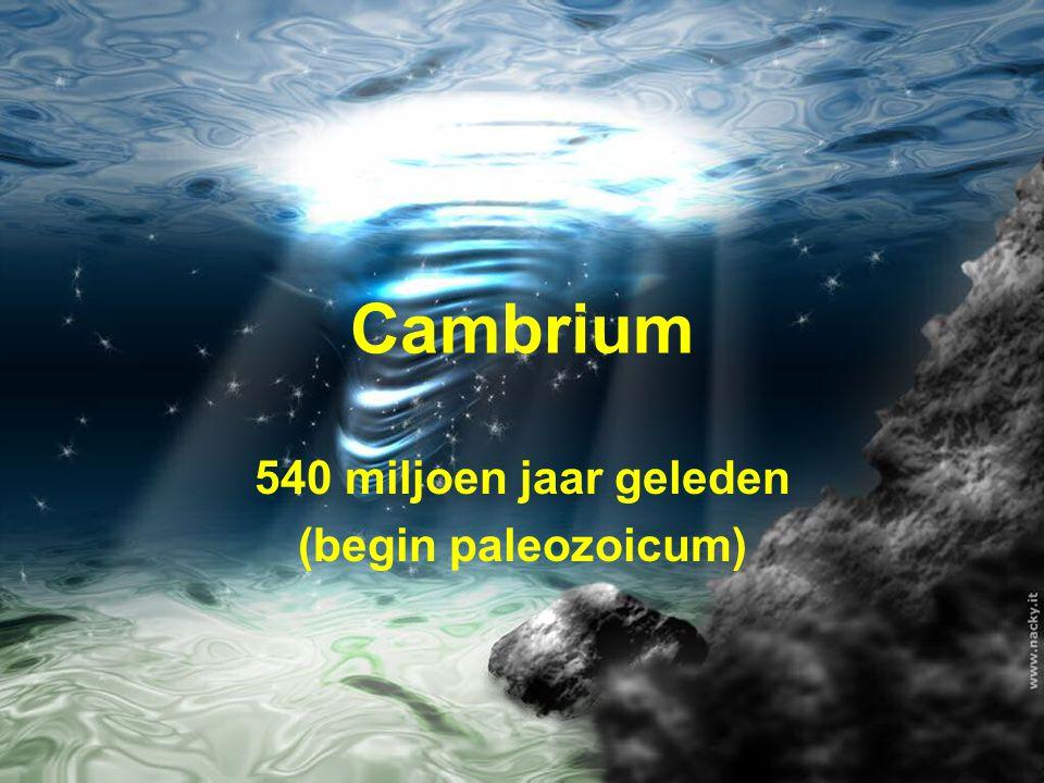 540 miljoen jaar geleden (begin paleozoicum)