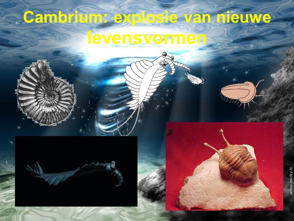 Cambrium: explosie van nieuwe levensvormen
