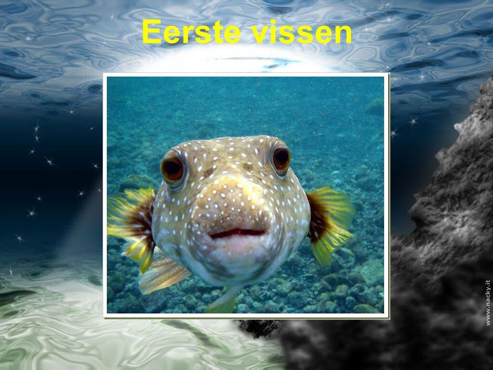 Eerste vissen