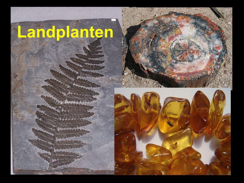 Landplanten Landplanten
