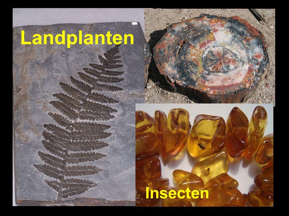 Landplanten Landplanten Insecten