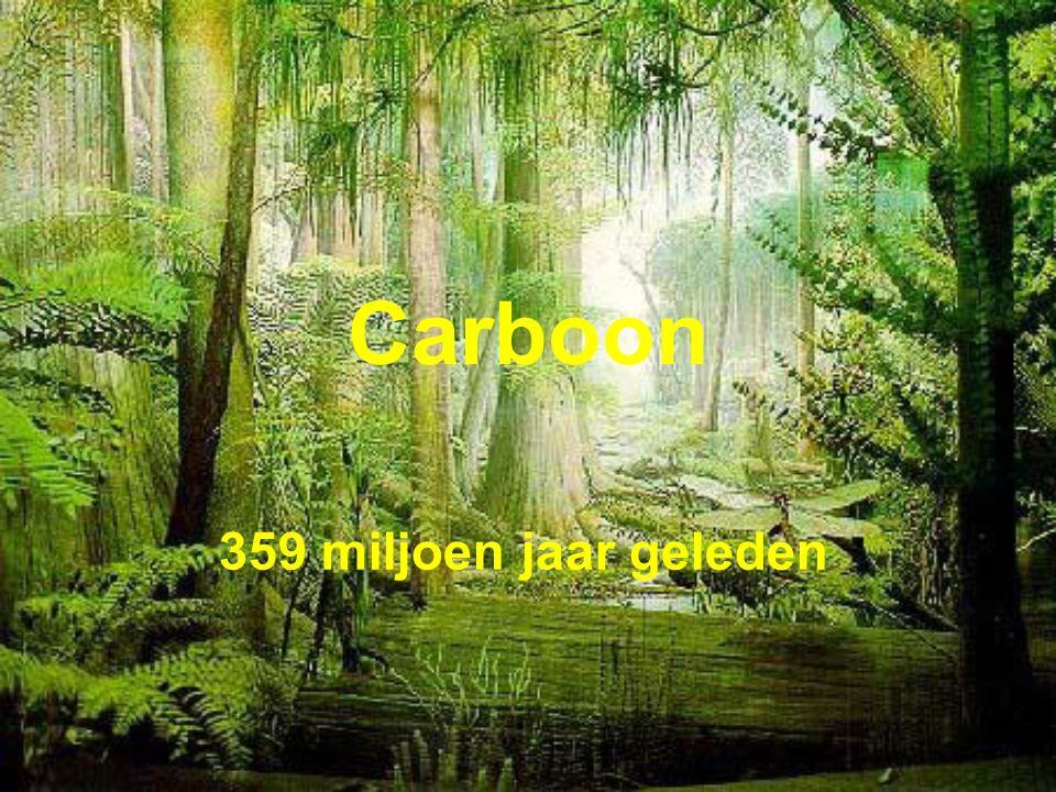Carboon 359 miljoen jaar geleden