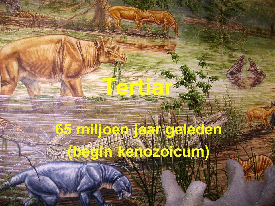 65 miljoen jaar geleden (begin kenozoicum)