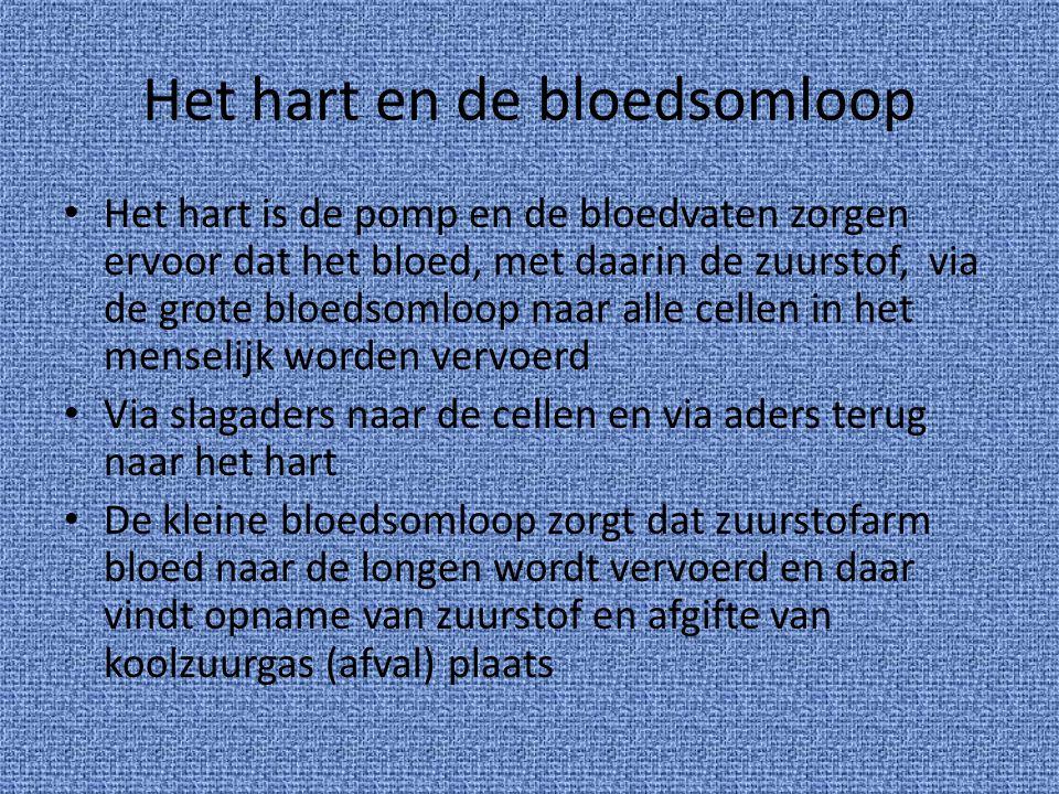 Het hart en de bloedsomloop