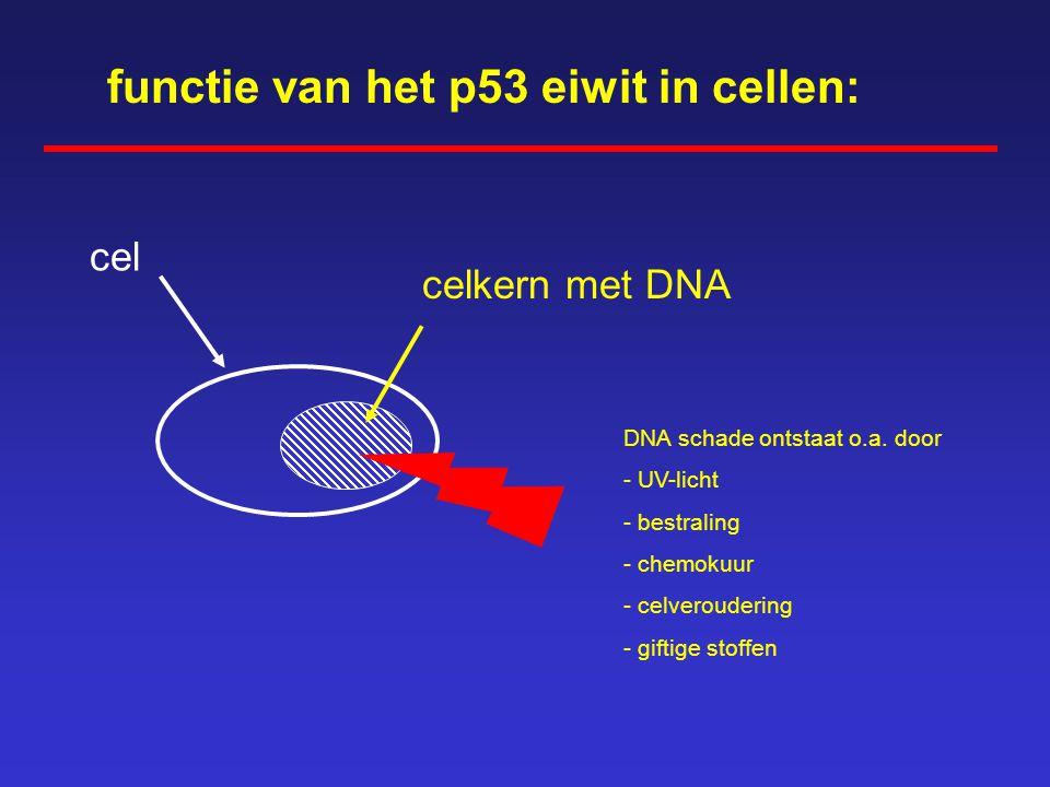 functie van het p53 eiwit in cellen: