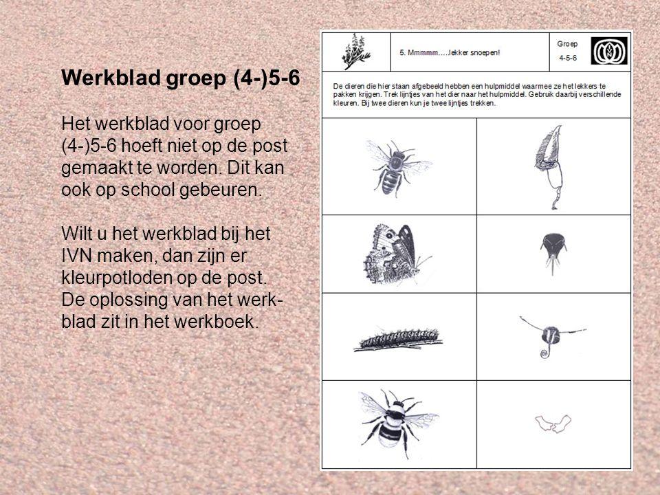 Werkblad groep (4-)5-6