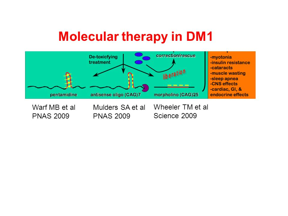 Molecular therapy in DM1