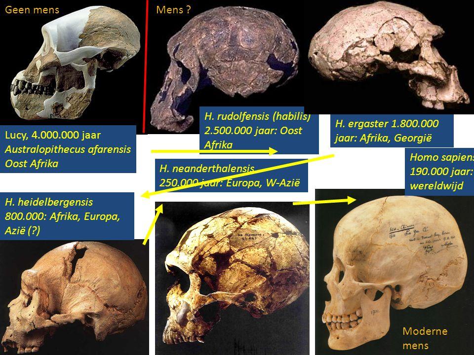 Geen mens Mens H. rudolfensis (habilis) 2.500.000 jaar: Oost Afrika. H. ergaster 1.800.000 jaar: Afrika, Georgië.
