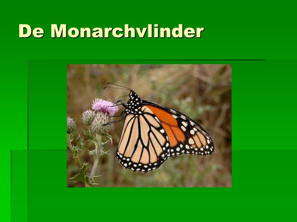 De Monarchvlinder