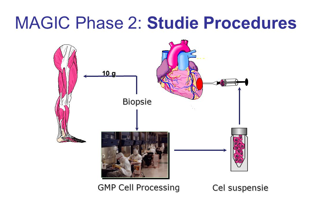 MAGIC Phase 2: Studie Procedures