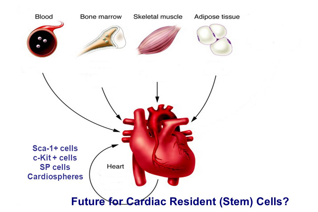 Future for Cardiac Resident (Stem) Cells
