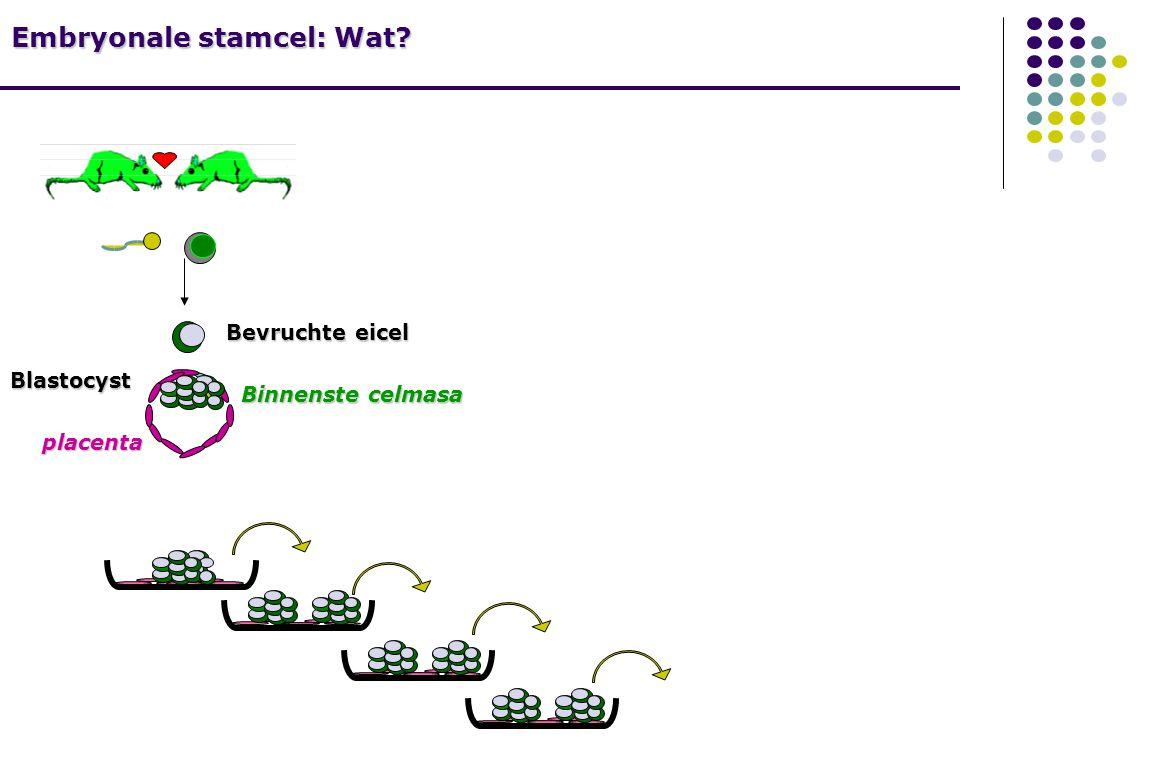 Embryonale stamcel: Wat