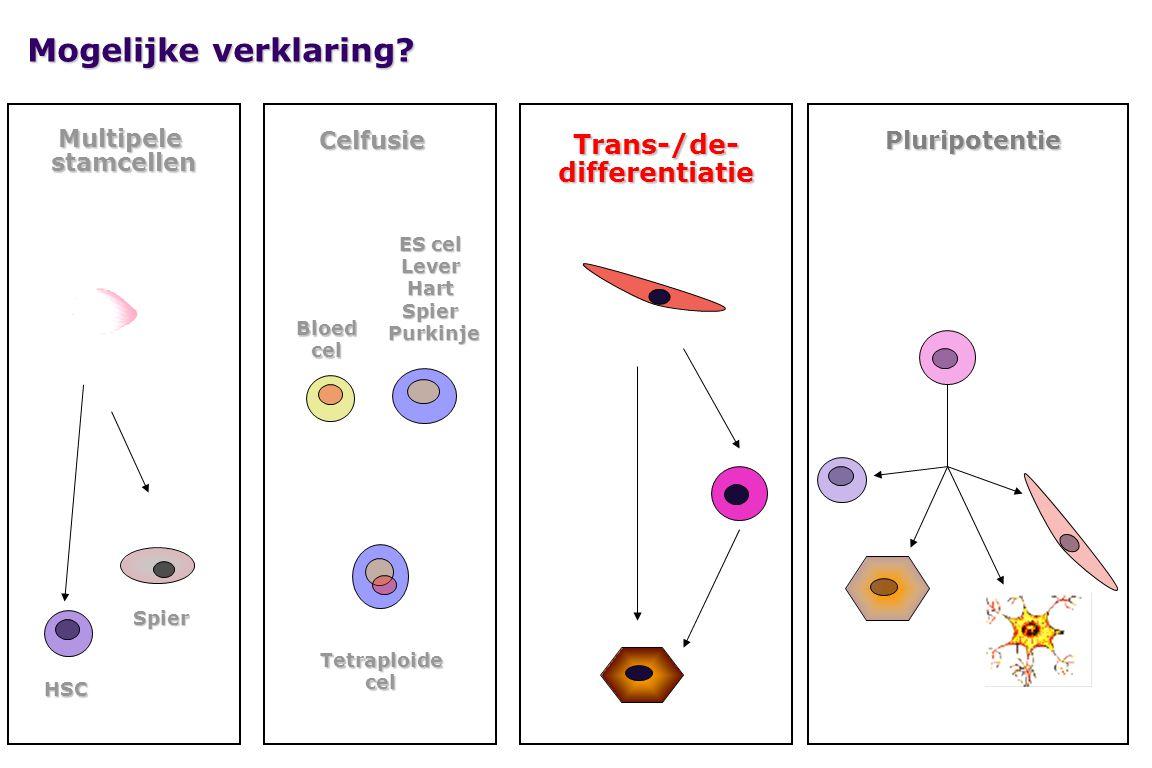 Mogelijke verklaring Trans-/de- differentiatie Multipele stamcellen